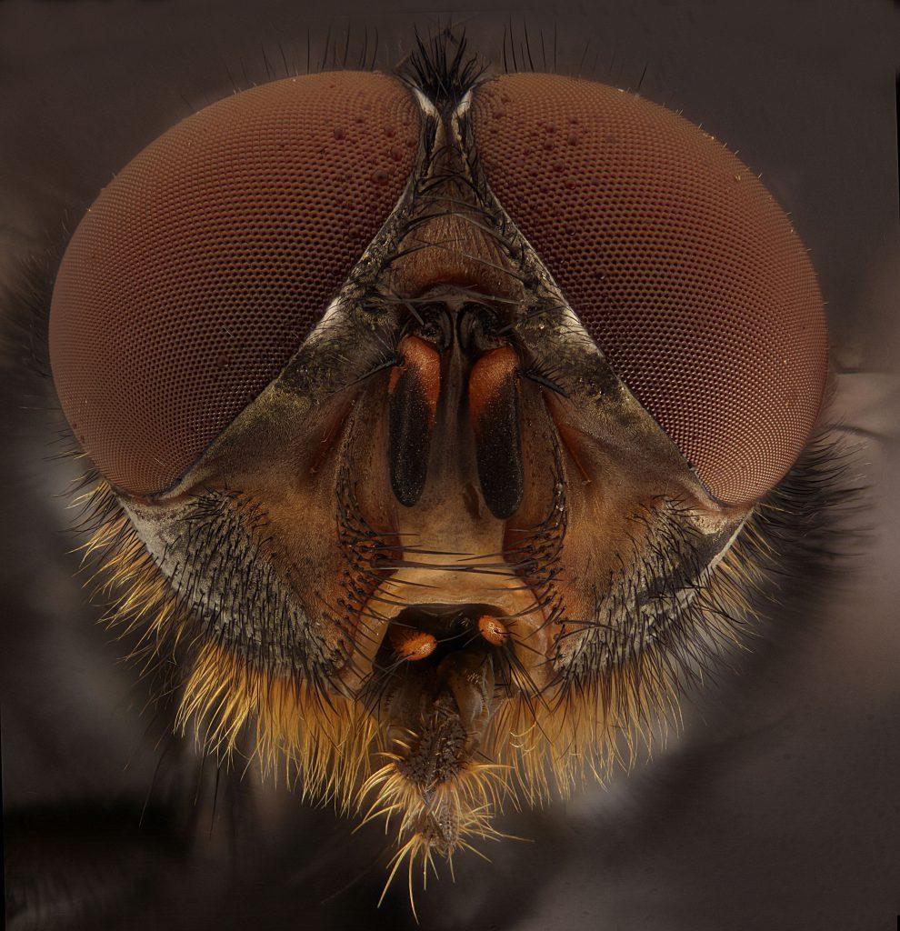Fliege V3 5x stitch 1