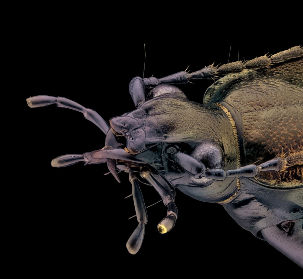 schwarzer Käfer 5x stitch 1